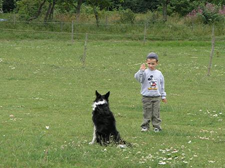 Axel utövar hunddressyr