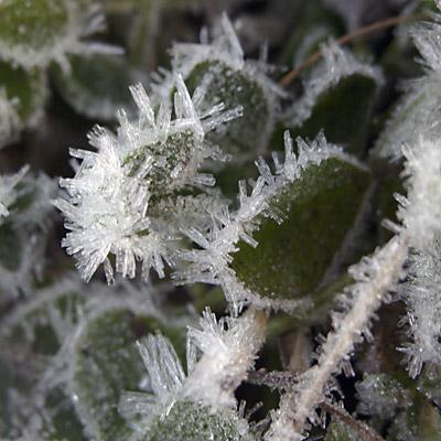 Frost i Luleå